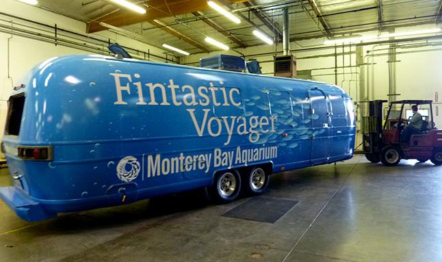Fintastic Voyager, Cinnabar