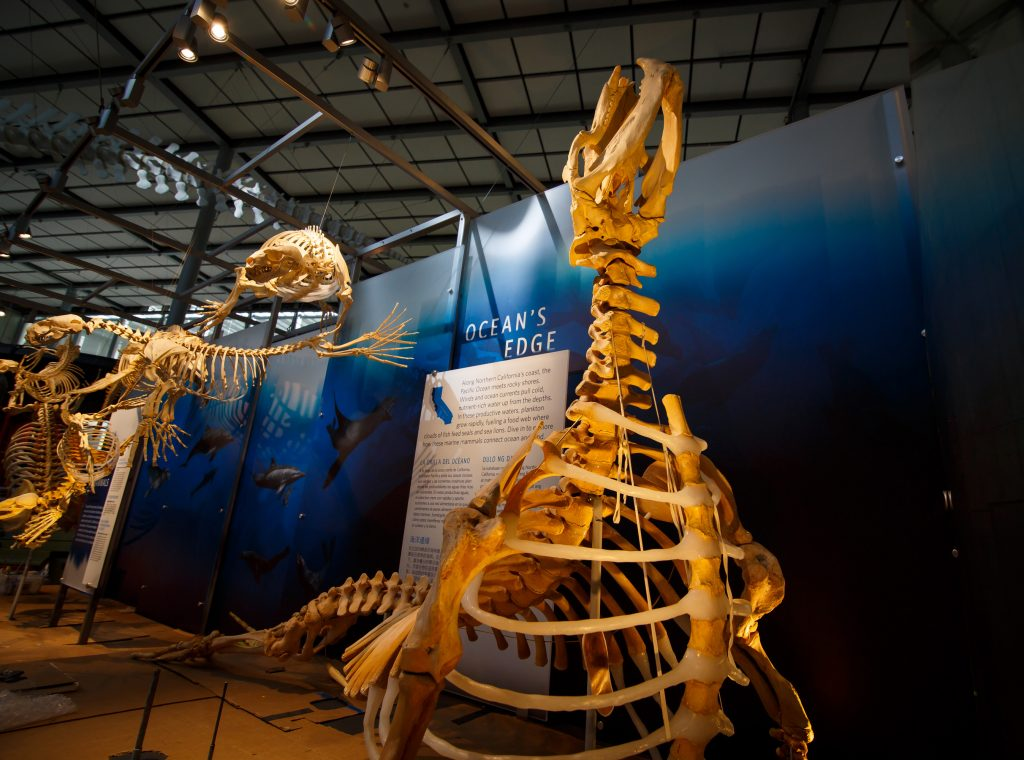 Giants of Land and Sea 3