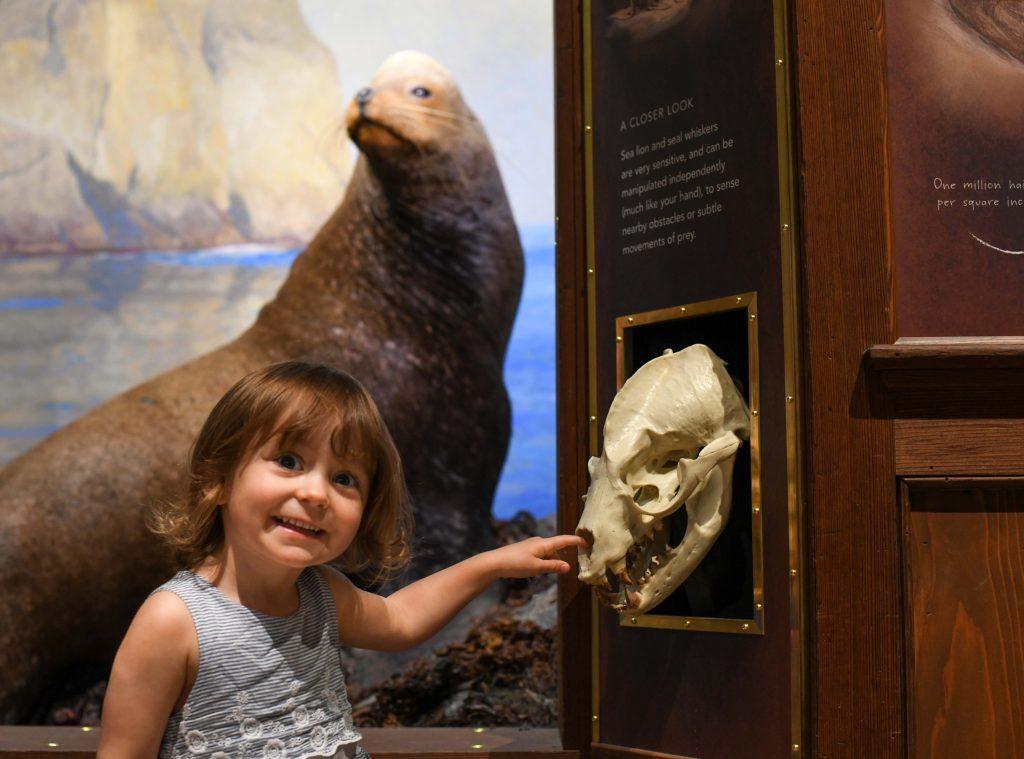 Santa-Barbara-Museum-of-Natural-History-5